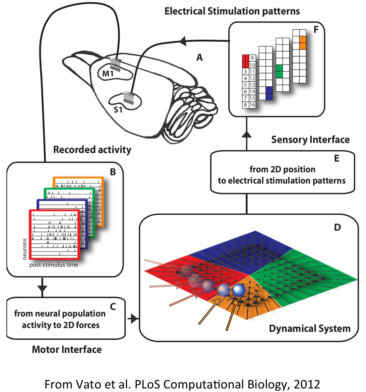 brain machine interface companies