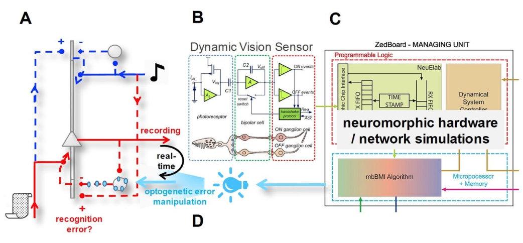 INI Institute of Neuroinformatics People